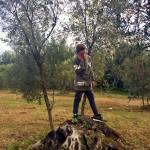 ragazzo_piante_ulivo